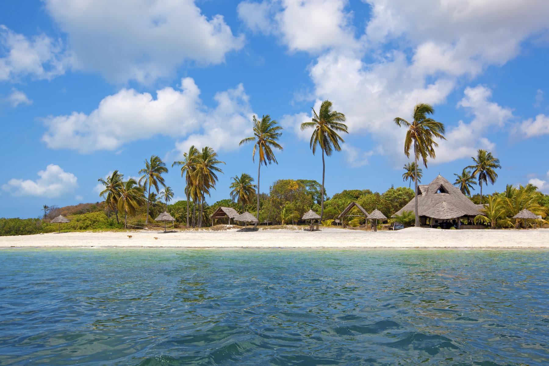 танзания занзибар пальмы пляж