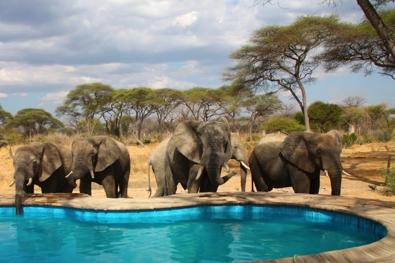 elephant in camping site