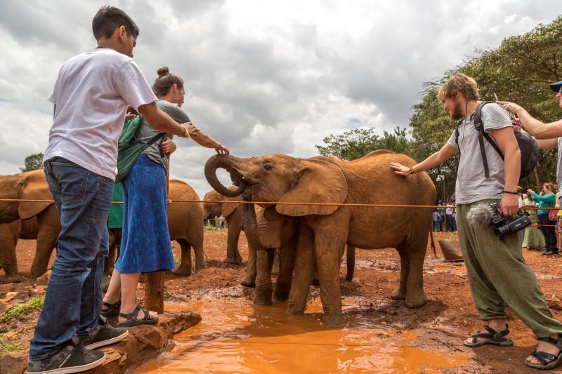 kenya visit elephants