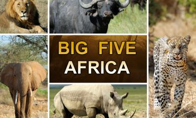 See the Big Five and the Gorillas in the Mist in Six Days