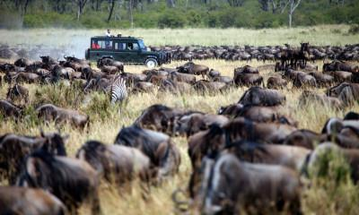 Best Places to See Wildebeest Migration in Serengeti