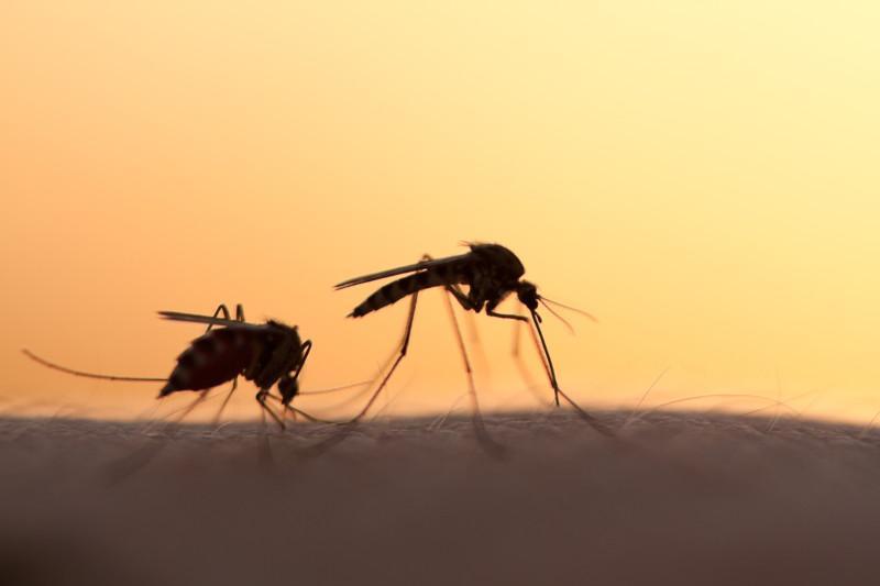 africa safari malaria