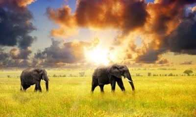 Tanzania Travel Information