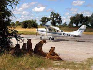 flying-safari-in-africa