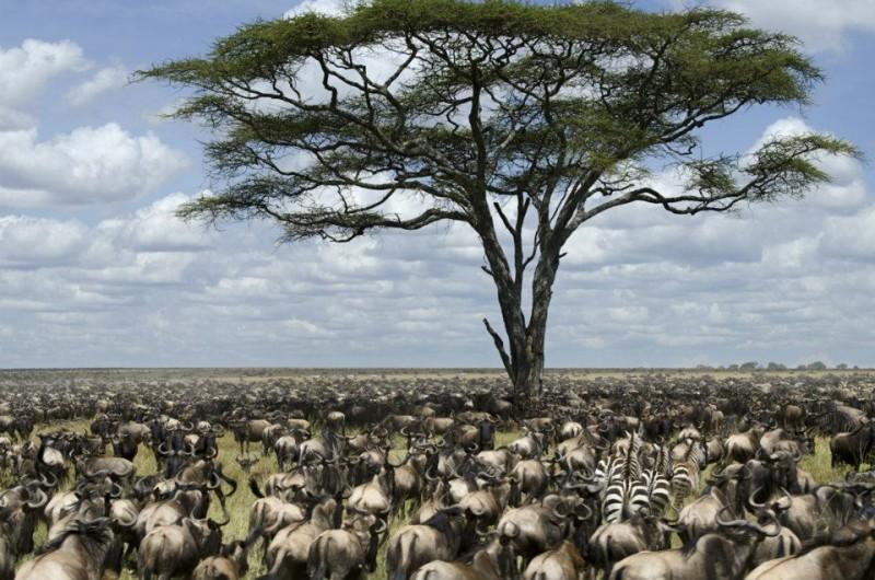 great migration kenya