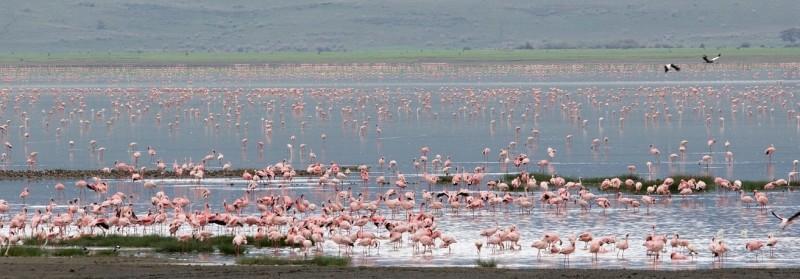 lake manyara national park flamingoes