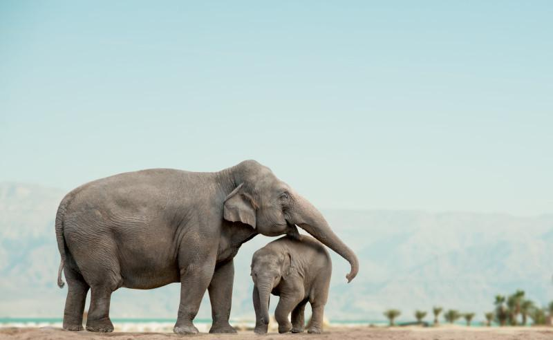 elephant tanzania safari