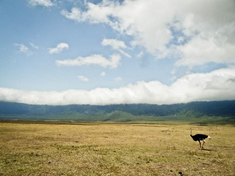 ostrich ngorongoro crater landscape