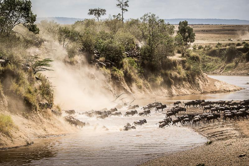 The Wildebeest Migration sees almost 2 million wildebeest move across the Serengeti in one of nature's most memorable displays.