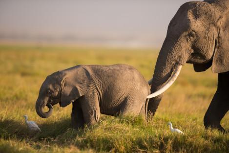 Amboseli_contensts