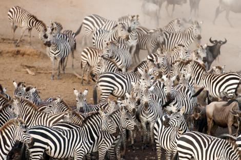 Migration_Kenia_Small