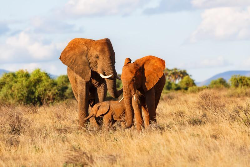 Elephant family in Samburu National Reserve