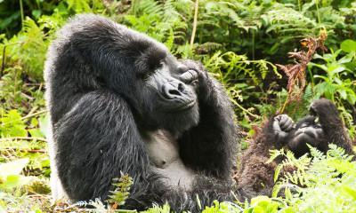 Optional Activities in Rwanda
