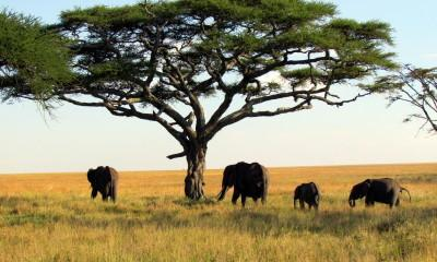 How to Book the Perfect African Safari Vacation