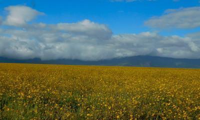 wildflowers ngorongoro