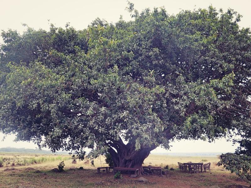 Amini Africa