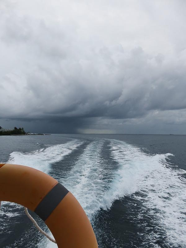 whale watching conrad maldives