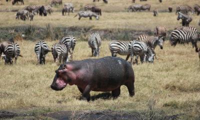 Safari Part Three: Ngorongoro Conservation Area