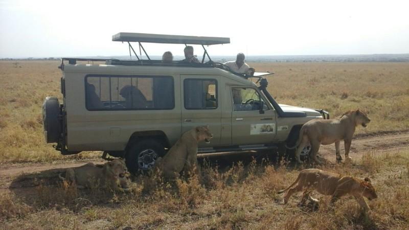 Serengeti Jeep