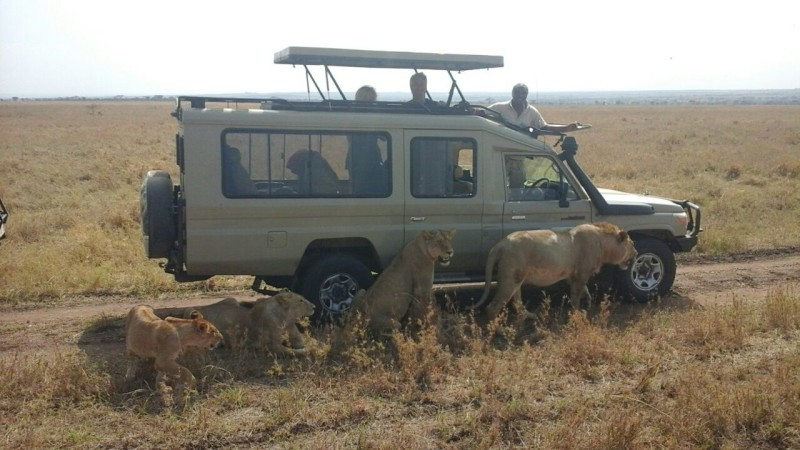 Serengeti Safari Jeep