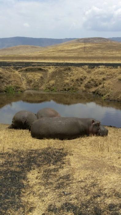 Hippo Pool Ngorongoro