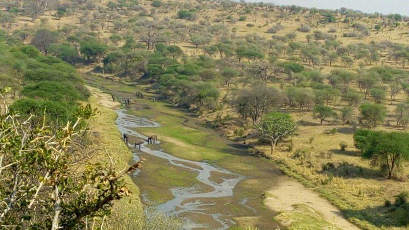 Tara riverbed in Tarangire National Park