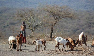 Big 5 & The Hadzabe tribe