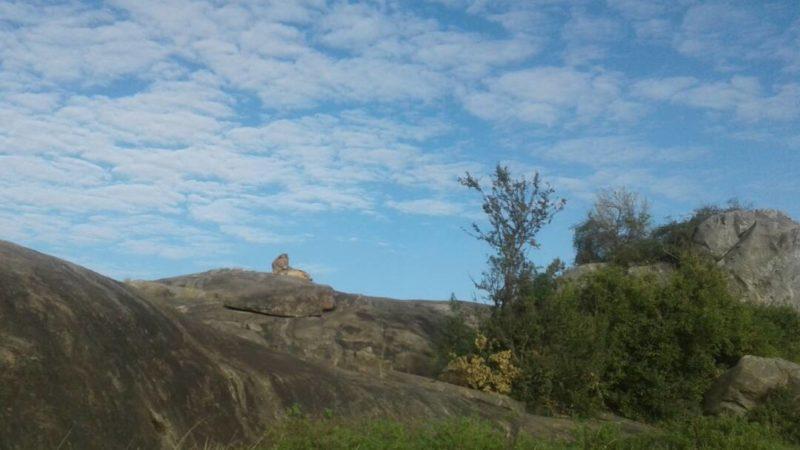 lions simba rocks
