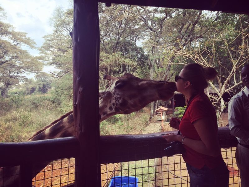 giraffe-center-nairobi-kenya