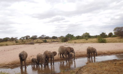 Adventures on Safaris this July