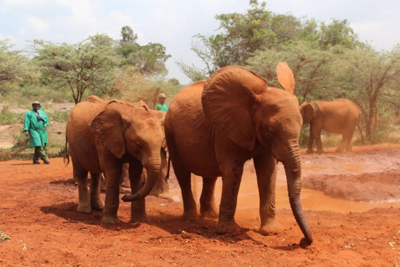 elephants-orphanage-nairobi