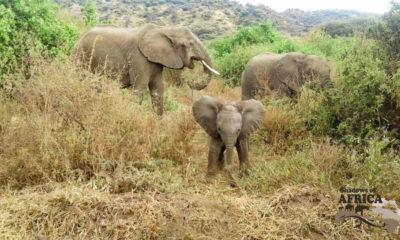 News on Tarangire National Park