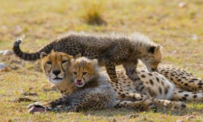 A Tanzania Safari Adventure