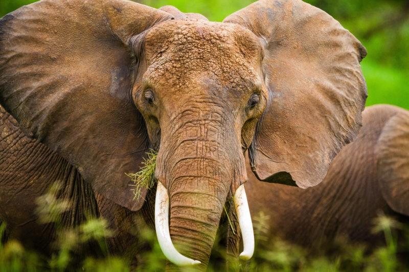 elephants-safari-africa
