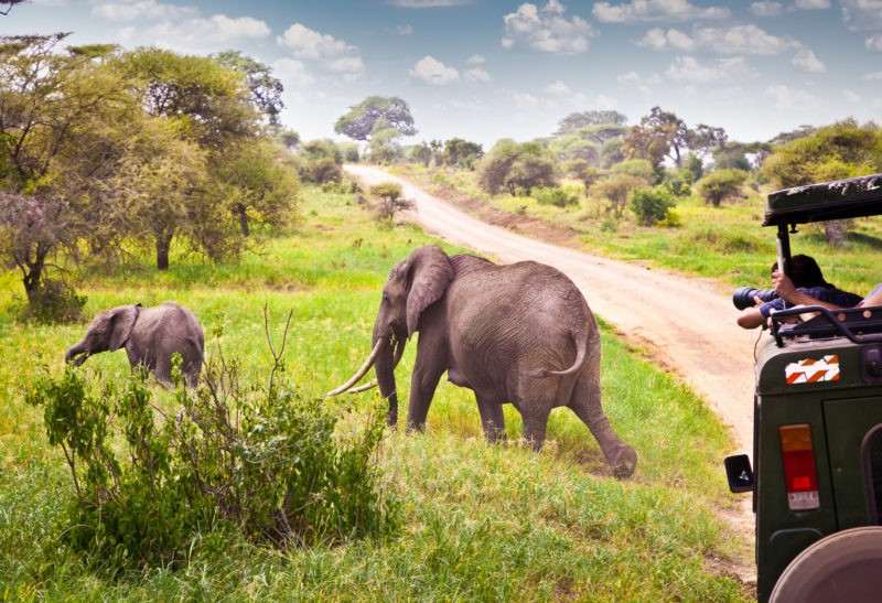 Tarangire-tanzania-travel-africa