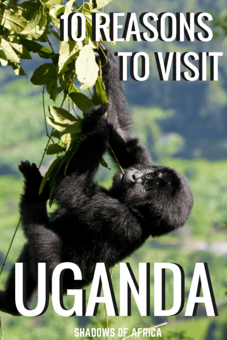 10 reasons you need to visit Uganda! From Kampala to the Nile to Gorilla Trekking, here's why Uganda needs to be in your Africa adventure. #Uganda #gorillatrekking #Africa #kampala #travel