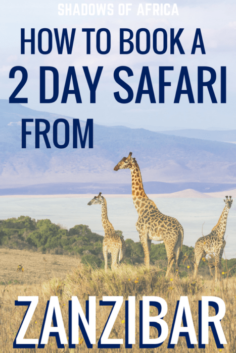 Add a dream safari to your Zanzibar vacation! Fly out to the Serengeti for a magical two-day safari. Here's how to plan your quick 2-3 day safari from Zanzibar! #Zanzibar #Africa #Tanzania #Safari #travel #adventure