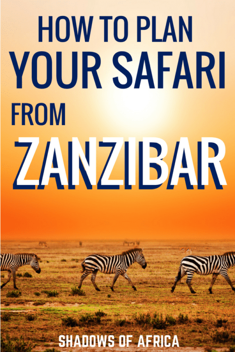 Are you flying in and out of Zanzibar? Do a 2 or 3 day safari from the beaches of Zanzibar. The incredible safari parks in Tanzania are just a quick flight away! Here's how to plan your safari from Zanzibar. #Zanzibar #Tanzania #safari #travel #Africa
