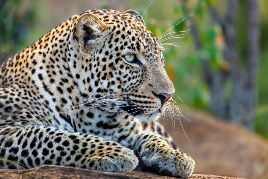 Big Five Safari - 6 days
