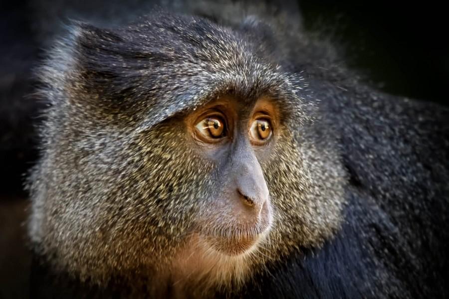 Safari from Zanzibar - Safari Escape - Three Days