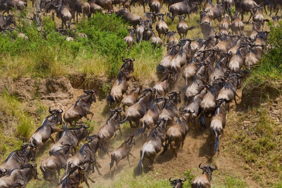 """Wildebeest Migration Safari River Crossing - 6 days """"by road"""" (July to October)"""