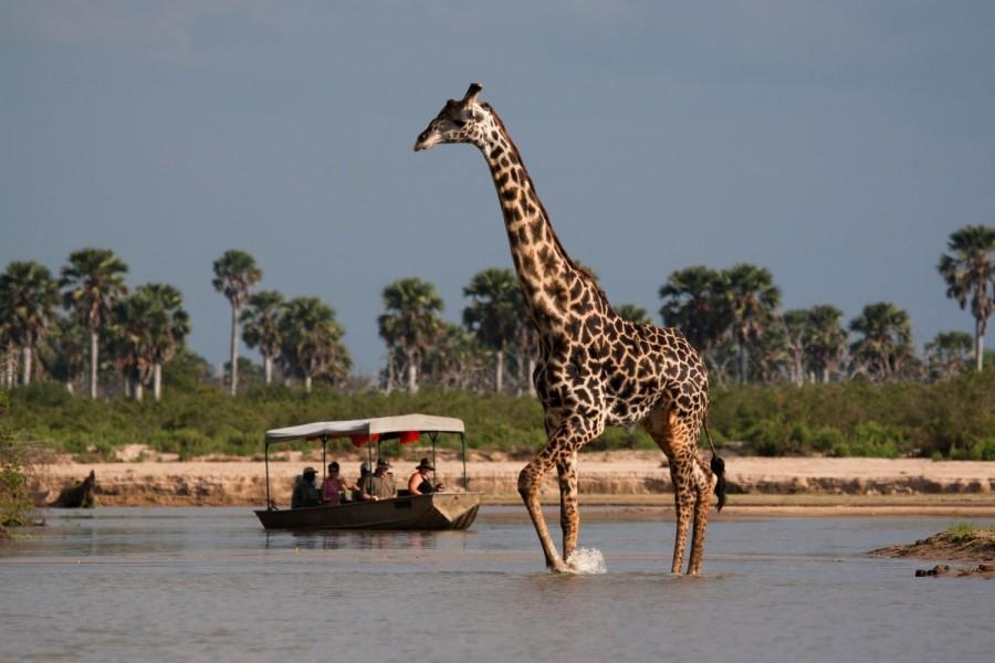 JOIN THE GROUP - Safari from Zanzibar - Selous Day Trip