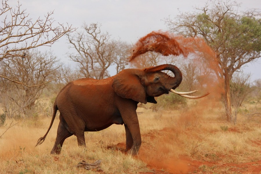 Tsavo East and West National Park