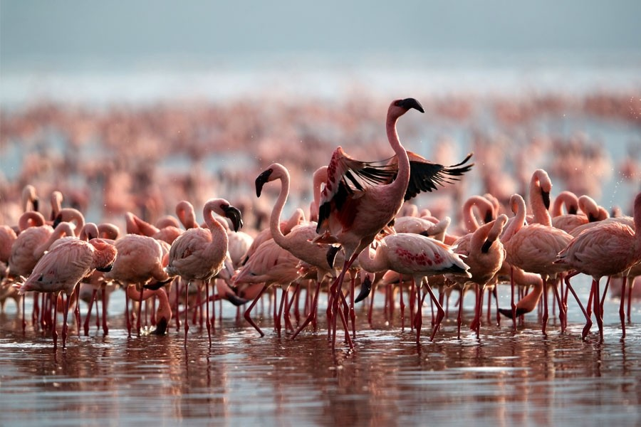 Two Day Flamingo Fling