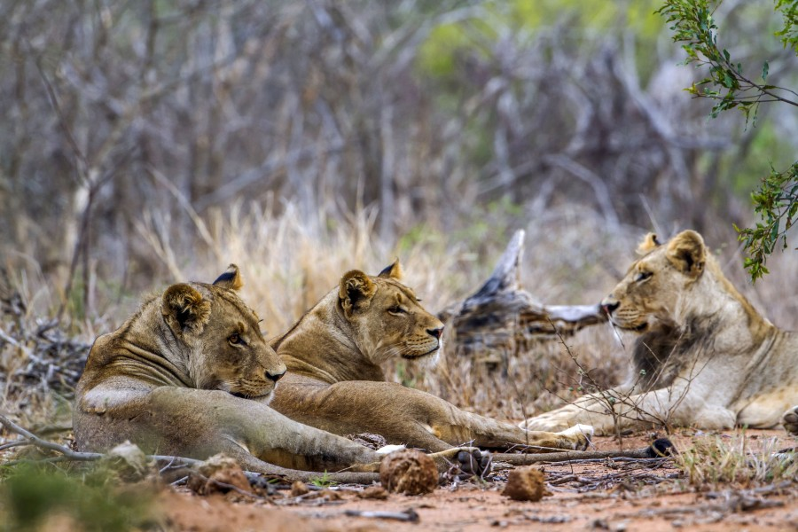 Nine Day Best of Zimbabwe Safari