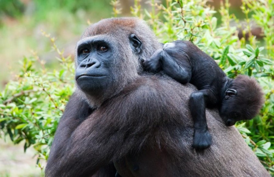 Three Day Mgahinga Gorillas & Culture Safari from Kigali