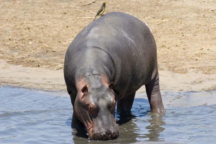 Safari to Katavi National Park - 4 days tour - western side of Tanzania