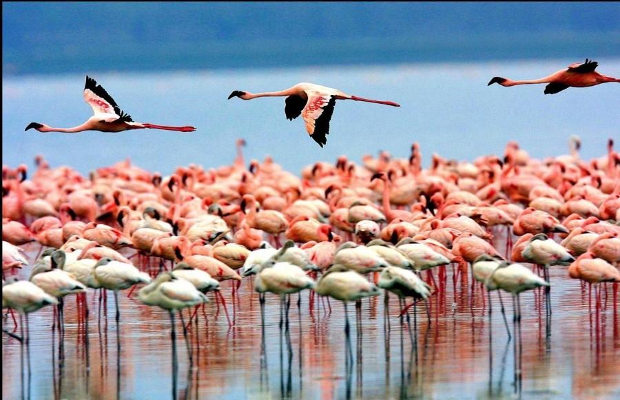 Safari to Lake Manyara