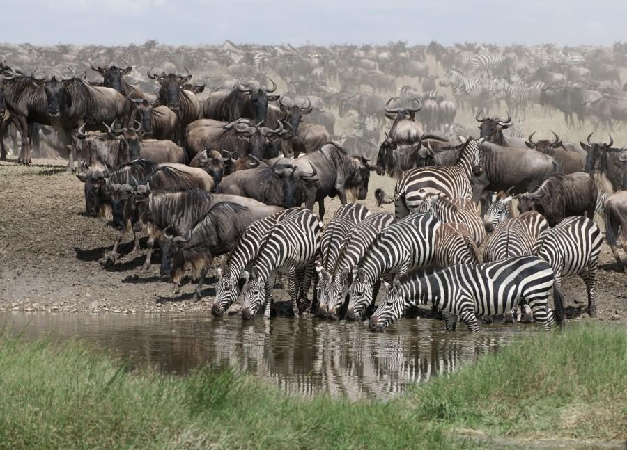 Wildebeest Migration Safari 2021 (All year round)