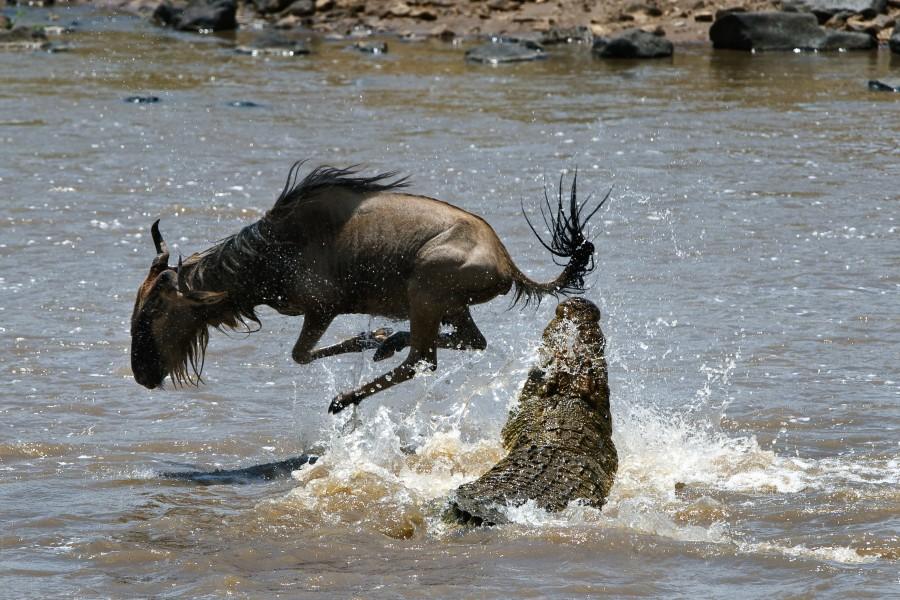 "Wildebeest Migration Safari "" Fly in ""  5 days (June to October )"